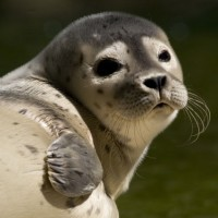 Cute seal eyes - discover the Seal station Friedrichskoog with HiVino