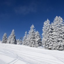 Beautiful winter landscape discovered with HiVino