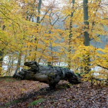 Enjoy the UNESCO beech groves in Müritz National Park
