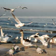 seagulsins on baltic sea Germany - HiVino
