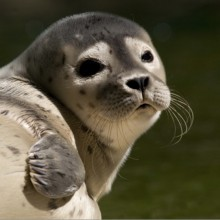 Discover seals in Wadden Sea National Park of Lower Saxony
