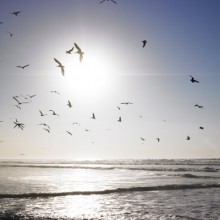 Observe all the birds in Schleswig- Holstein Wadden Sea National Park Germany