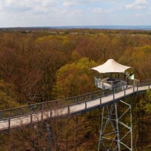 Treetop trails in Hainich National Park Germany