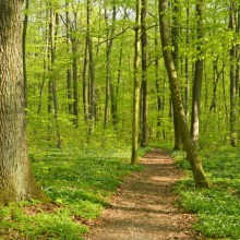 Hiking trails in Hainich National Park - HiVino
