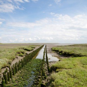 Norderney - a nature lovers paradise