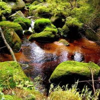 Magnificent stream Ilse in Nationalpark Harz, Germany