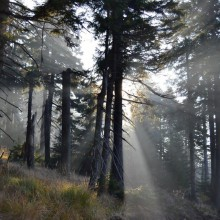 Sun shines through the forest in Harz National Park - HiVino