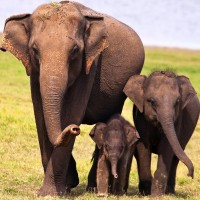 Elephant family in the Serengeti Park Hodenhagen - HiVino