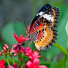 Beautiful butterfly from the butterfly house Biosphere Potsdam- HiVino
