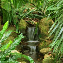 tropical garden in Potsdam discovered with HiVino
