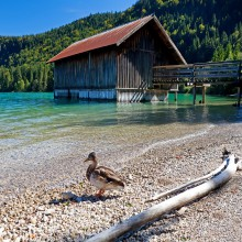 "Romantic boathouse and ""wild"" life at Walchensee, found through HiVino"