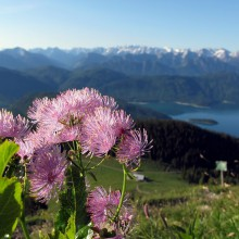 View of the Walchensee - discover Germany with HiVino