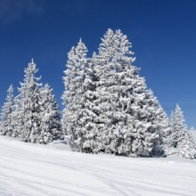 Winter wonderland Frauenwald - discover Germany with HiVino