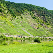 Moselle valley – discover Germany with HiVino