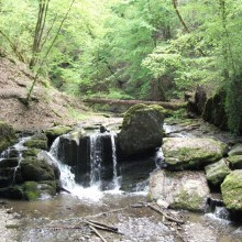 Purling brook in the Ehrbachklamm – discover Germany with HiVino
