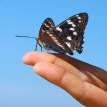 Butterfly on a finger – discover the Garden of butterflies Friedrichsruh with HiVino