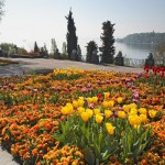 Mainau – flower island in Lake Constance