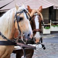 Horse carriage in Münster – discovered with HiVino