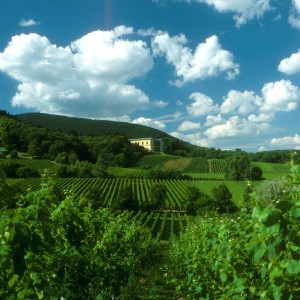Villa Ludwigshöhe – German Wine Route