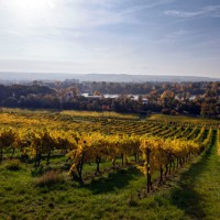 Breathtaking panoramic view on to the Rheingau valley, Germany
