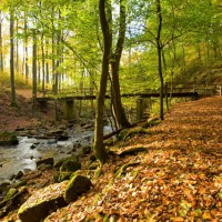 Enchanting Holzbachgschlucht close to Rennerod, Germany - Hivino